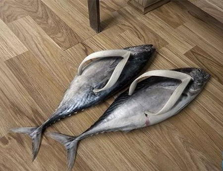 animal shoes4