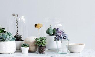 Pořiďte si do domu květiny, které vypadají stylově