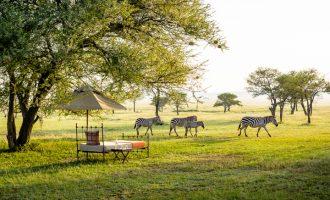 Safari trip, část II.: Kde zažijete akci i komfort?